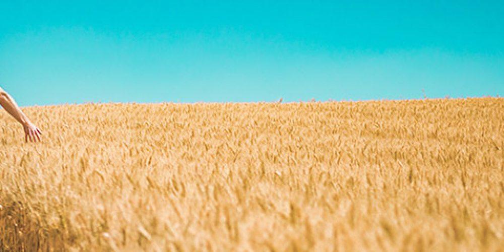 UNI EN ISO 22000 – Sistemi di Gestione per la Sicurezza Alimentare