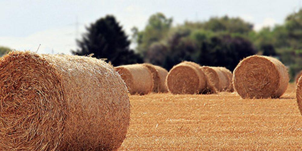 UNI EN ISO 22005 – Certificazione del Sistema di Rintracciabilità nella Filiera Alimentare e Mangimistica