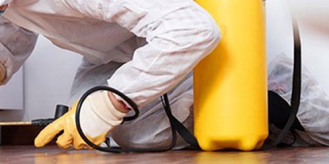 UNI EN 16636 – Servizi di Gestione e Controllo delle Infestazioni (Pest Management)